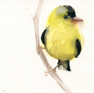 10-AmericanGoldfinch_2_Watercolor_HollyWach